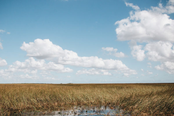 everglades from a fanboat