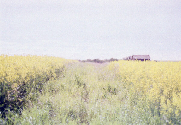 prairies on film v