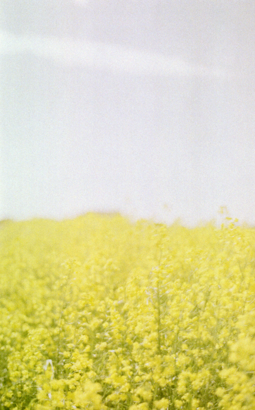 prairies on film iv