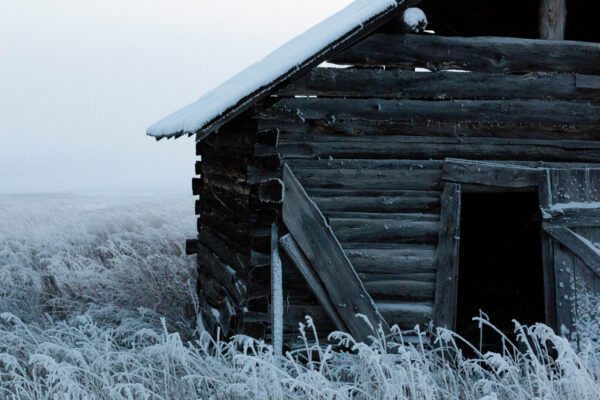 frosted abandonment